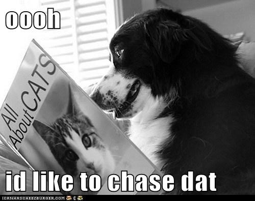 oooh  id like to chase dat