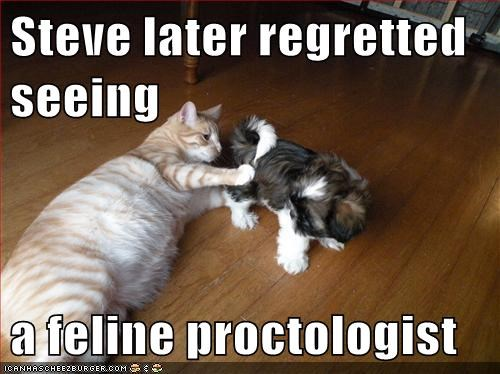 Steve later regretted seeing  a feline proctologist