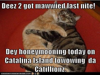 Deez 2 got mawwied last nite!  Dey honeymooning today on Catalina Island fowowing  da Catillionz.