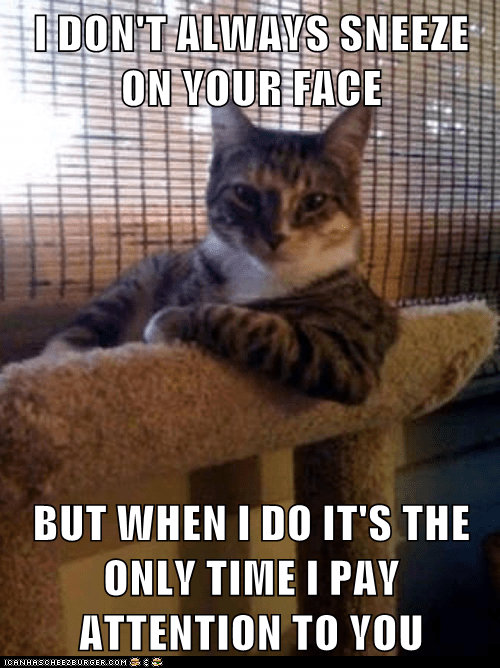 Animal Memes: The Most Interesting Cat in the World - You Want Attention, Get a Dog
