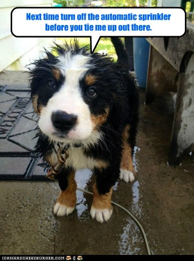 dogs,puppy,sprinkler head,wet,what breed