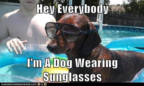 Obvious Dog - Wearing Sunglasses