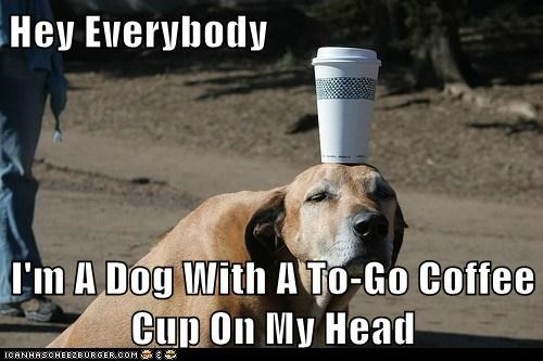 Obvious Dog - Has Coffee Cup On Head