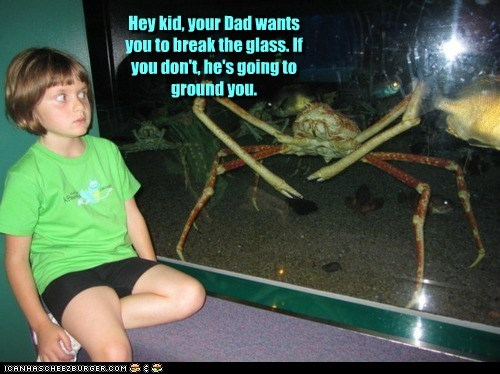 breaking glass,crab,crab people,grounded,kid,little girl,lying