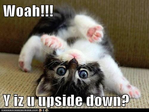 Woah!!!  Y iz u upside down?