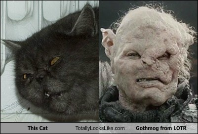 This Cat Totally Looks Like Gothmog from LOTR