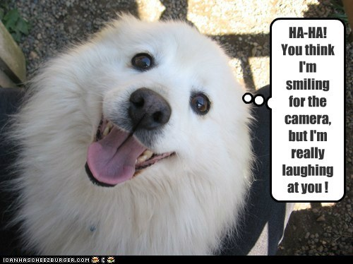 DOGGY HUMOR !