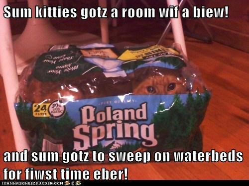 Sum kitties gotz a room wif a biew!  and sum gotz to sweep on waterbeds for fiwst time eber!