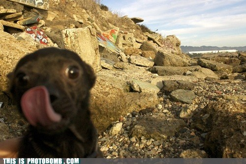 animal,Animal Bomb,bomb,dogs,outside,tongue