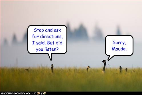 arguing,ask for directions,geese,husband and wife,listen,lost,sorry,stop,Travel