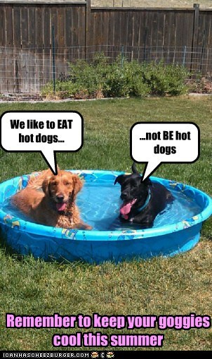Cheezburger PSA: Don't be a HOT dog!