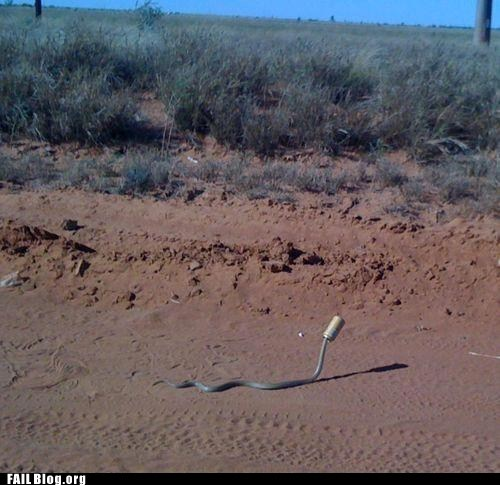 FAIL Nation: Snake FAIL