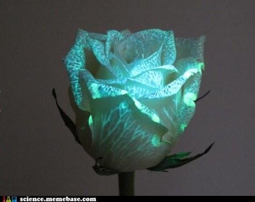 biology,flowers,glowing,Life Sciences,petals