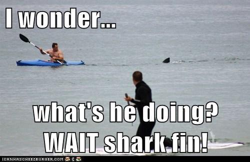 I wonder...  what's he doing? WAIT shark fin!