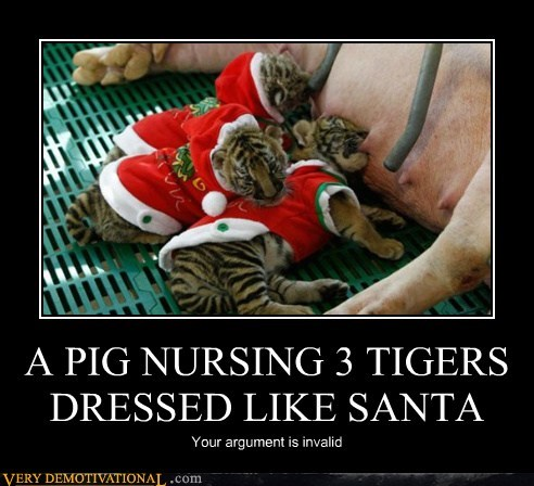 A PIG NURSING 3 TIGERS DRESSED LIKE SANTA