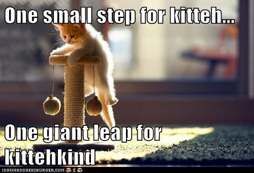 One small step for kitteh...  One giant leap for kittehkind