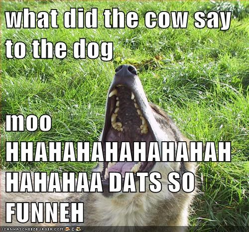 what did the cow say to the dog  moo HHAHAHAHAHAHAHAHHAHAHAA DATS SO FUNNEH