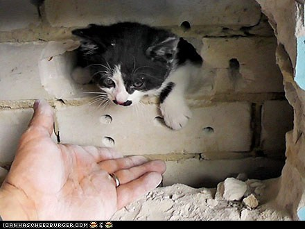 Around the Interwebs: Kitten Stuck in Wall Gets Rescued by Firefighters