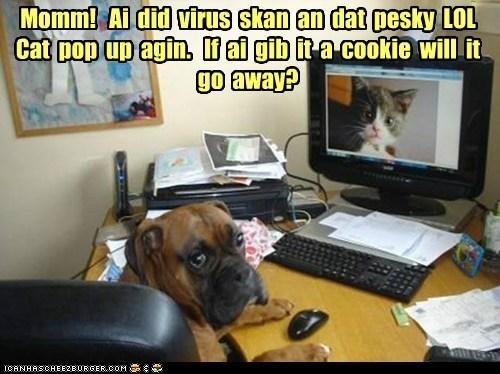 boxer,cat,computer,cookies,dogs,virus scan