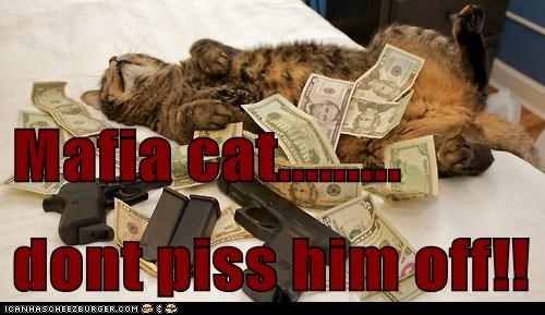 Mafia cat......... dont piss him off!!