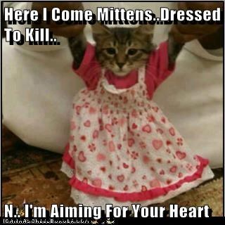 Here I Come Mittens..Dressed To Kill..  N.. I'm Aiming For Your Heart