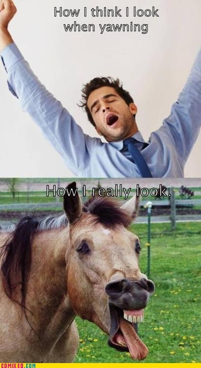 A Yawn or a Neigh?