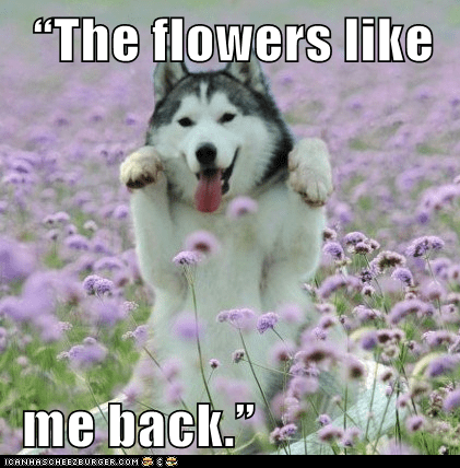 """The flowers like    me back."""