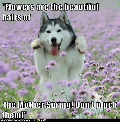 """Flowers are the beautiful hairs of   the Mother Spring! Don't pluck them!"""