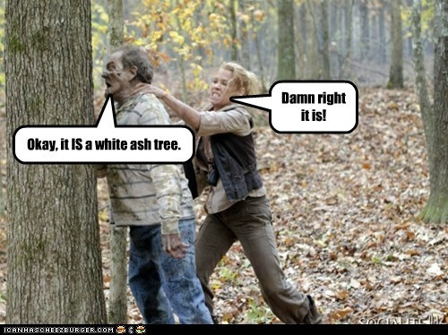 bet,damn right,headbutt,tree,The Walking Dead,zombie
