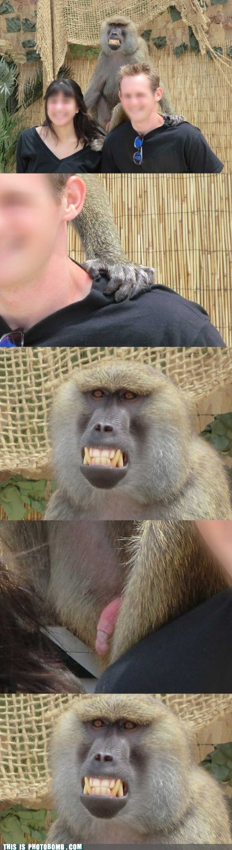 This Is Photobomb: I.R. Baboon