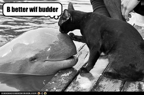 Cats,confused,fish,food,hungry,lick,nom,seafood,smell,taste,whale