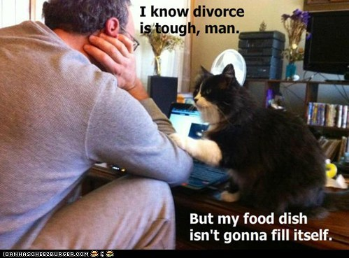 captions,Cats,divorce,food,food bowl,hungry,insensitive,lolcats,there there