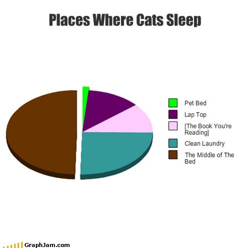 Places Where Cats Sleep