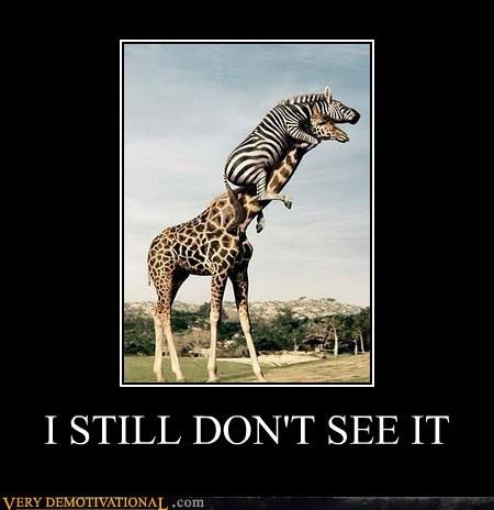 bad idea,giraffes,hilarious,wtf,zebra