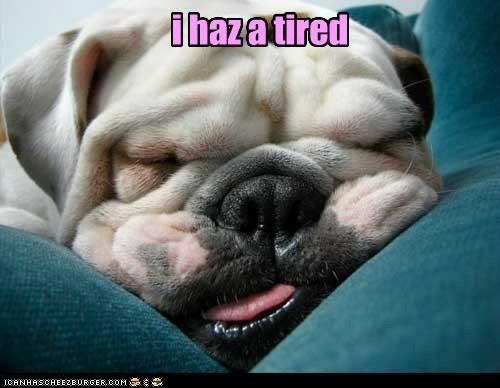 best of the week,bulldog,dogs,i has a hotdog,sleepy,tired,wrinkles