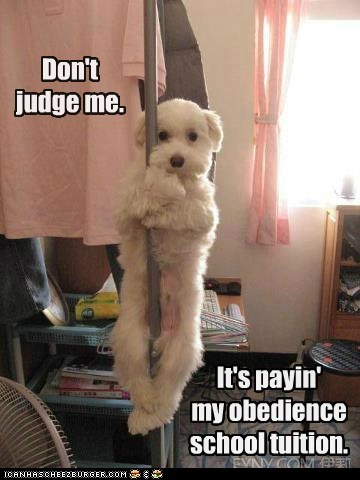 best of the week,captions,dogs,dogs dressed up,Hall of Fame,obedience school,stripper pole,terrier mix