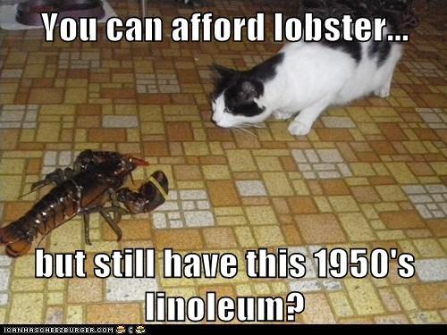 cat,disbelief,floor,kitchen,linoleum,lobster,priorities,seriously