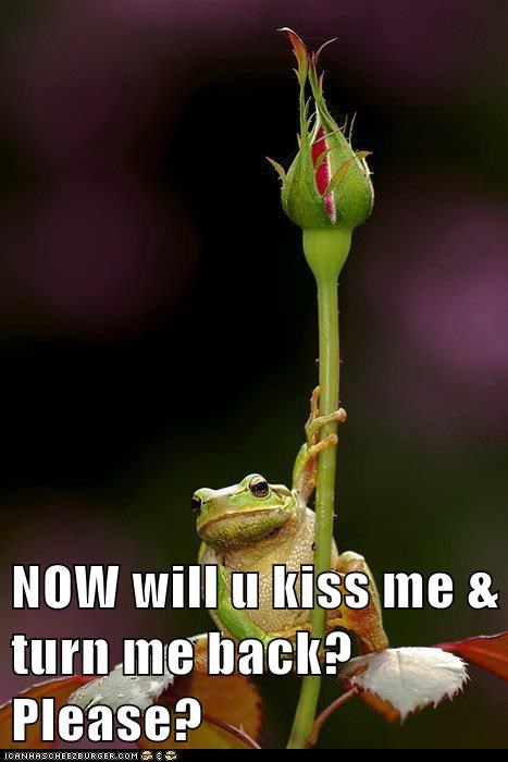bargaining,fairy tale,Flower,frog,KISS,please,spell,the frog prince