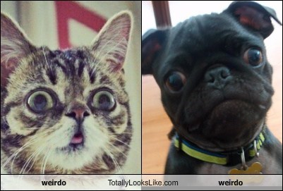 weirdo Totally Looks Like weirdo
