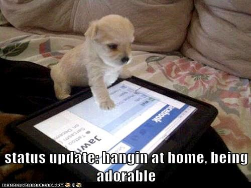 best of the week,captions,dogs,Facebook note,ipad screen,puppy,status updates,what breed