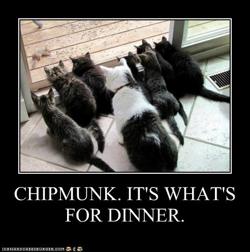 CHIPMUNK. IT'S WHAT'S FOR DINNER.