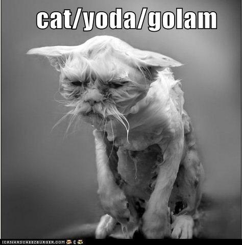 cat/yoda/golam