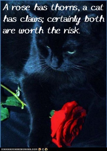 Cat Truisms - thorns