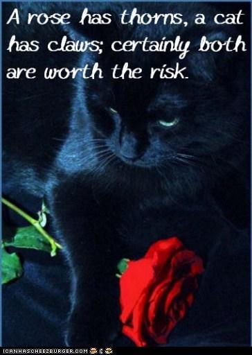 Cat Truisms - thorns