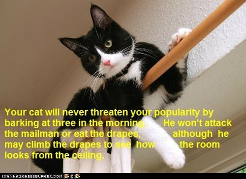 Cat Truisms - barking