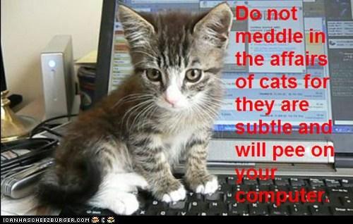 Cat Truisms - meddle