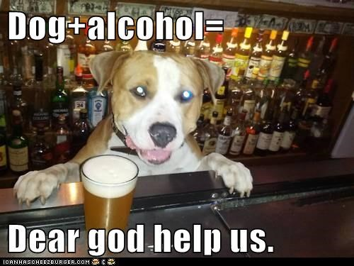 Dog+alcohol=  Dear god help us.