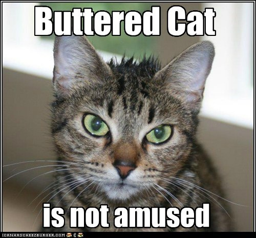 buttered cat is not amused