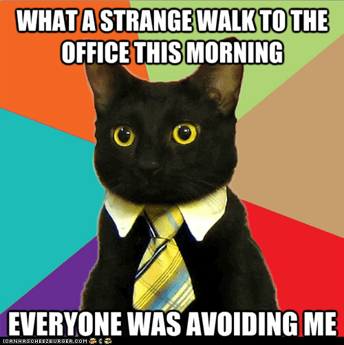 avoiding,best of the week,Business Cat,Cats,friday the 13th,holidays,Memes,scared,scary,superstition,work