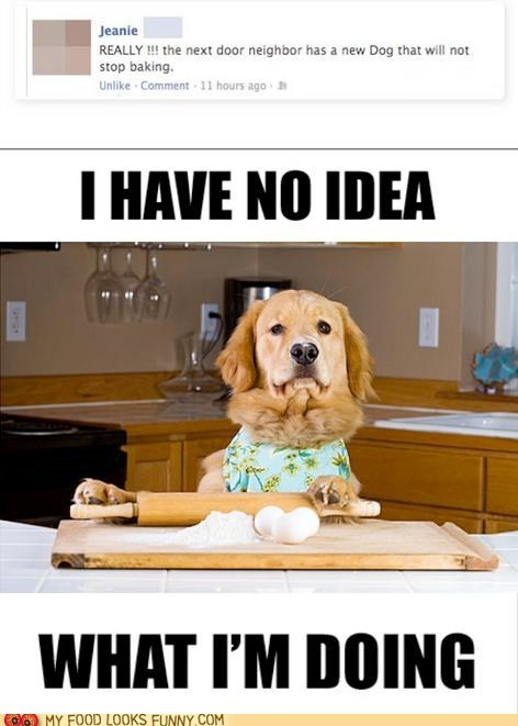 baking,dogs,kitchen,learning,neighbor